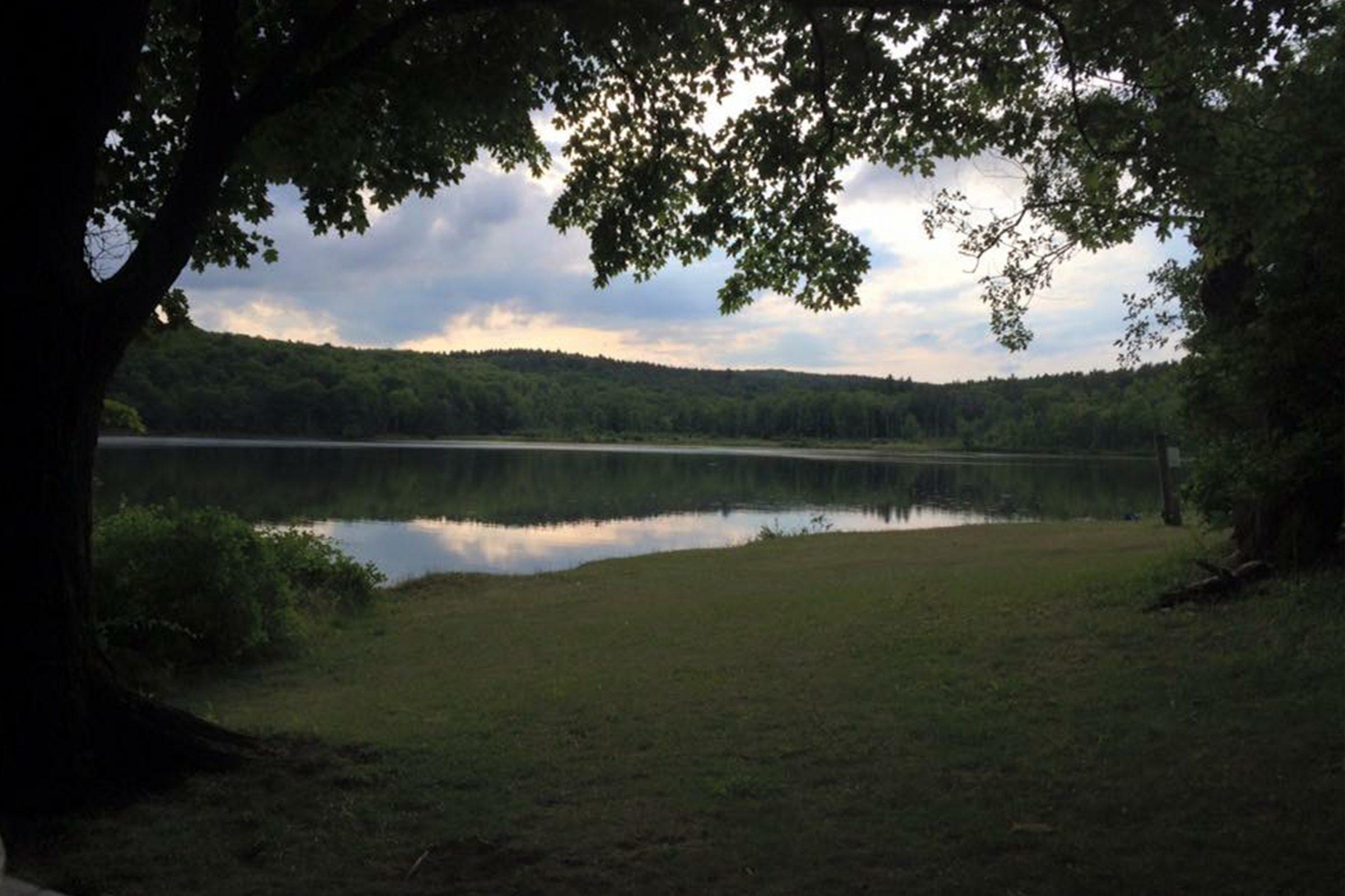 Lake Myosotis